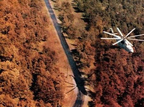 czerwony las czarnobyl