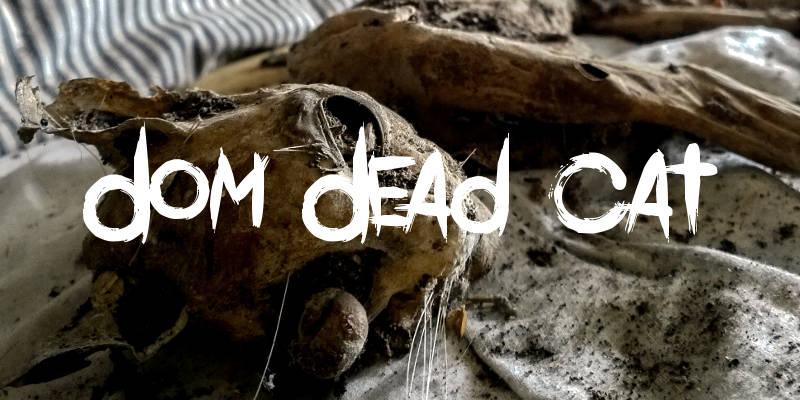 dom dead cat